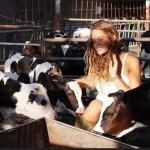 Wszystko o poidłach w rolnictwie